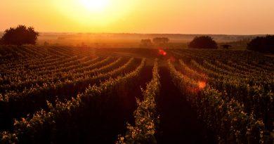 Lutzmannsburger Weingärten