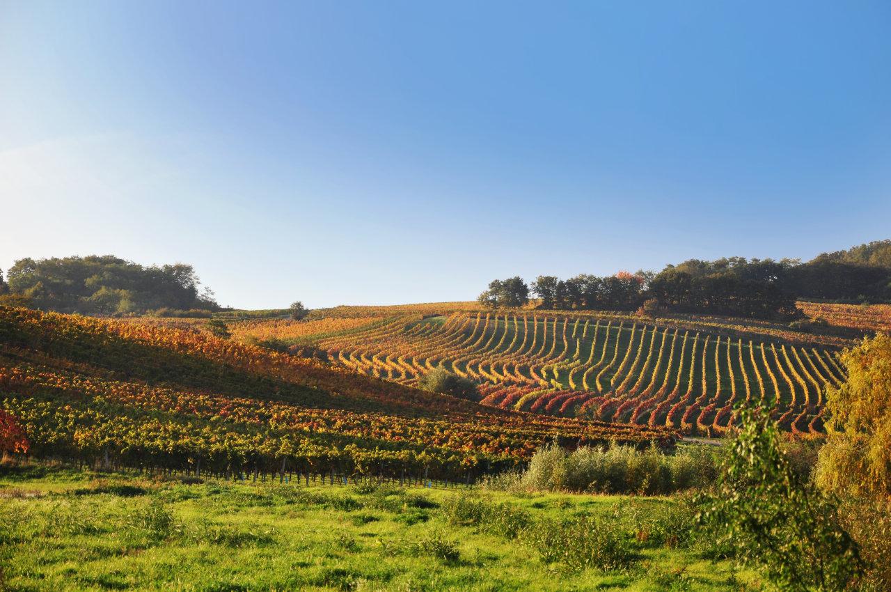 Neckenmarkter Weingärten