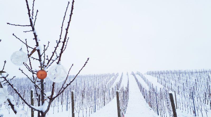 Weihnachtlicher Schnee im Blaufränkischland