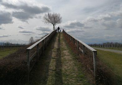 Lutzmannsburger Weingärten im Blick
